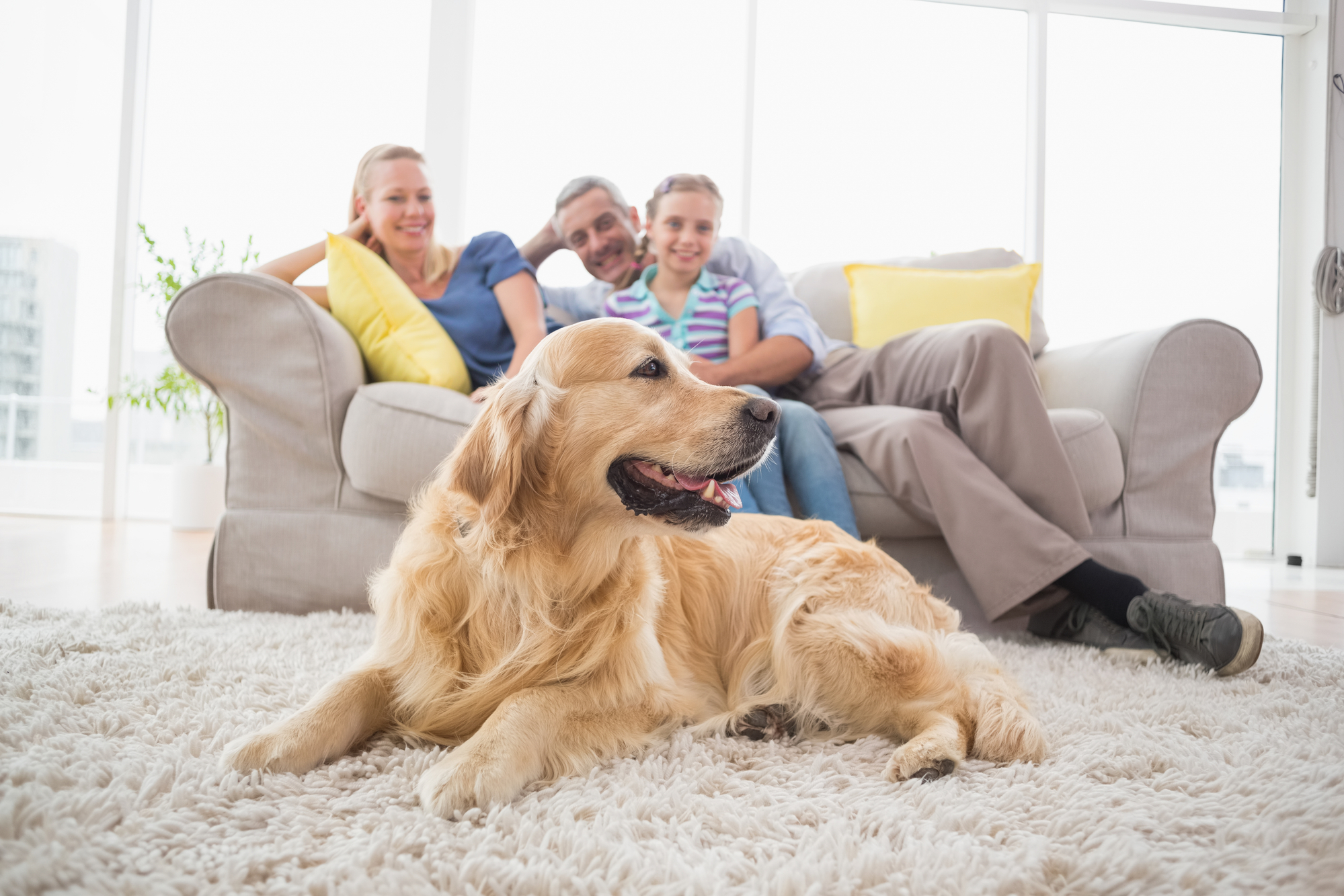 Golden Retriever with family at home